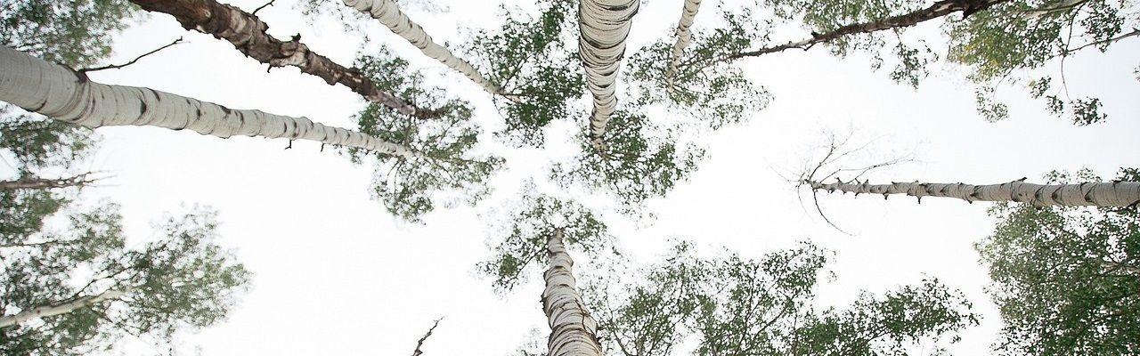 gestion groupement forestier