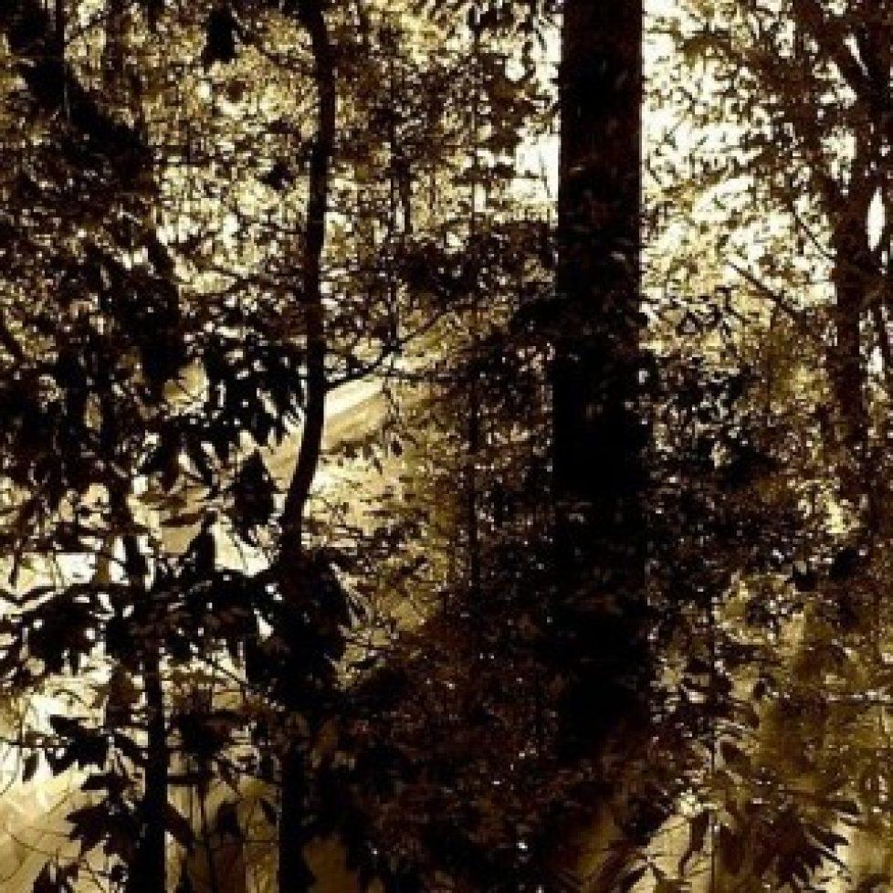 achat-groupement-forestier