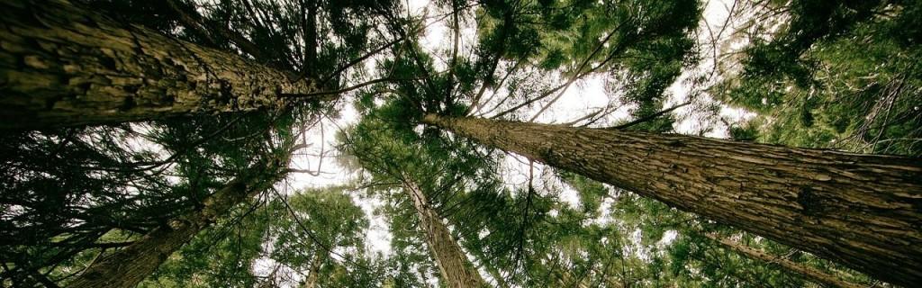 groupement forestier-fiscalité