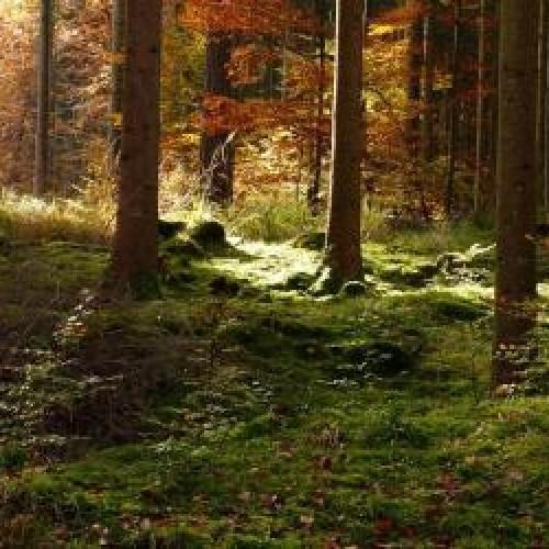 Exemples de forêts