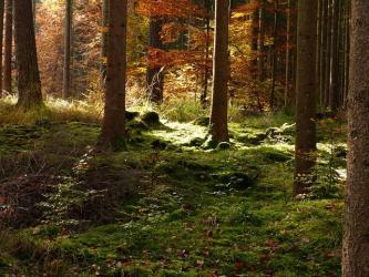 groupement-forestier-foret-de-trois-fonds