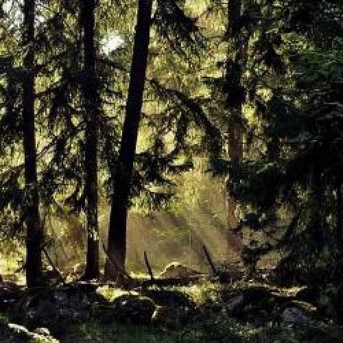 groupement-forestier-foret-du-veyton