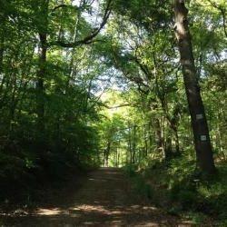 investir-groupement-forestier