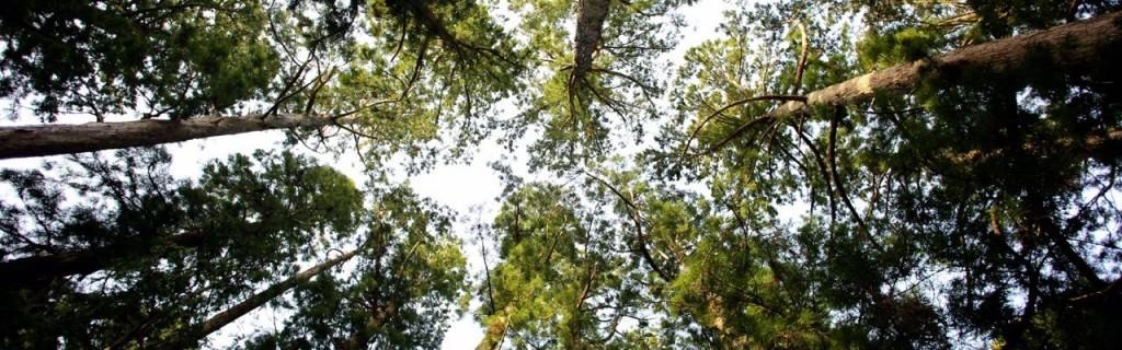 investissement dans un groupement forestier