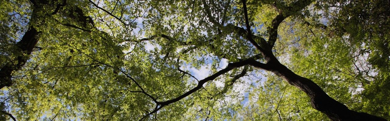 groupement forestier partenaires