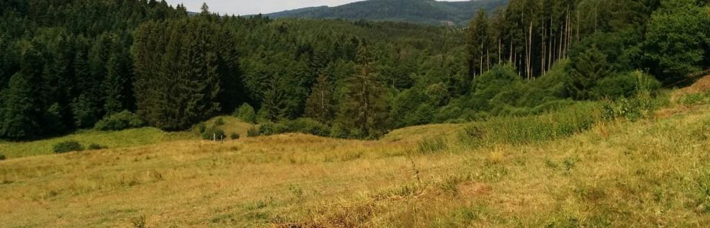 Le pro du Groupement Foncier Forestier (GFF)