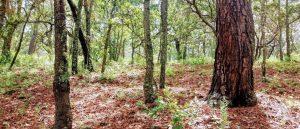 Transmission à titre gratuit- un régime fiscal de faveur pour les bois et forêts 2018