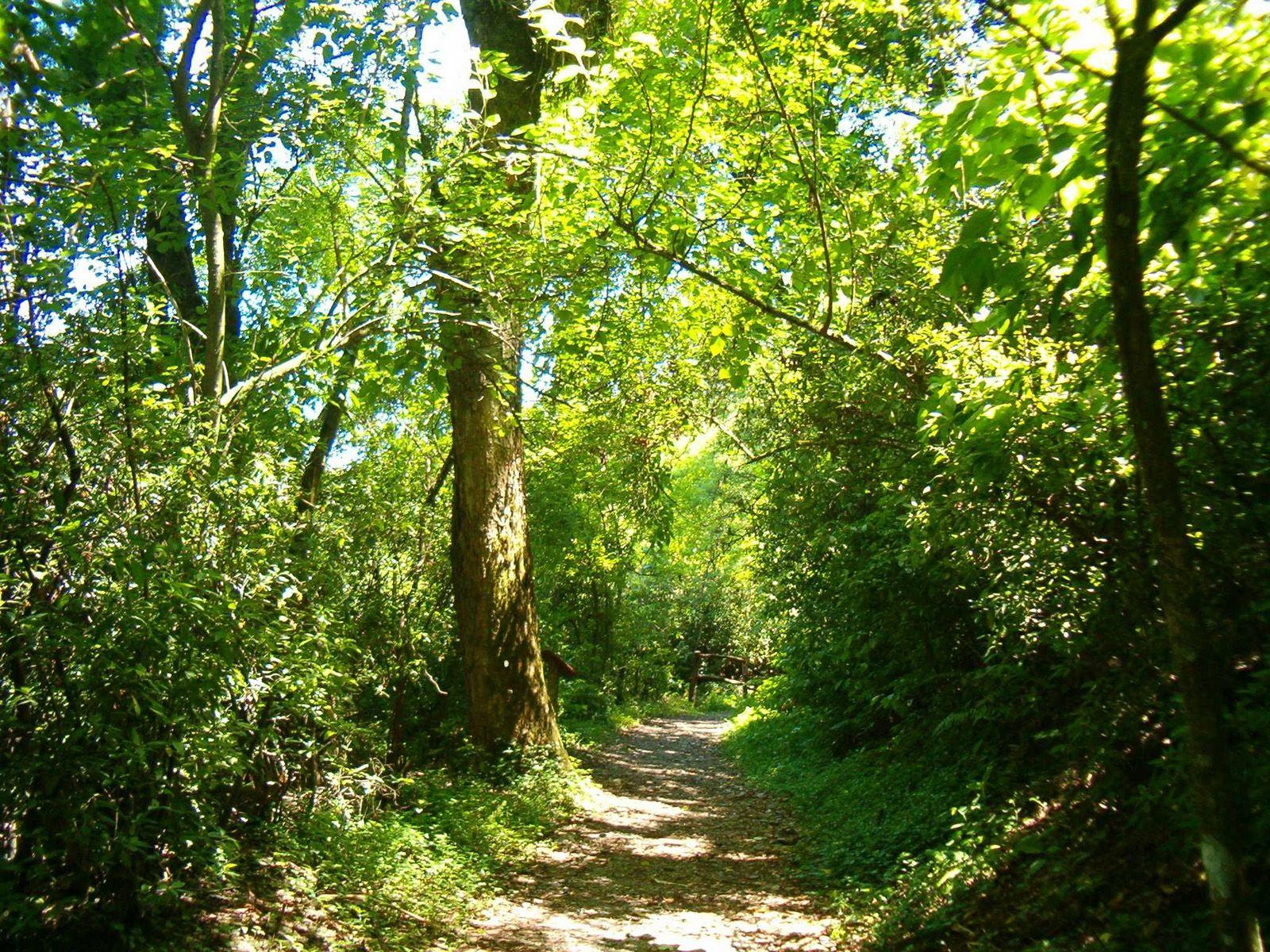 propositions votées en matière investissement forestier et rural lors du 114ème congrès des notaires en France