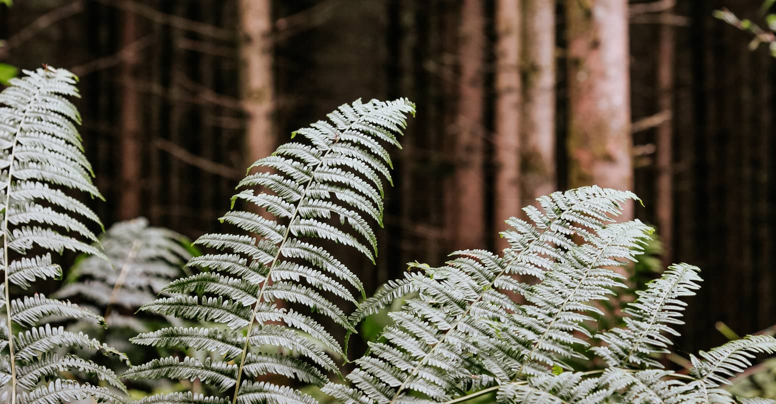 Je contacte le cabinet financier pour investir dans un groupement forestier (1)