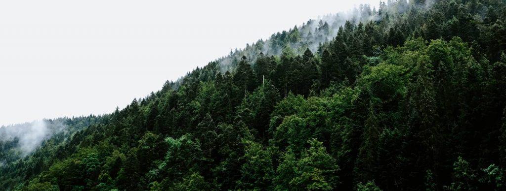 Fiscalité des Groupements Fonciers Forestiers IR IFI Transmission Succession