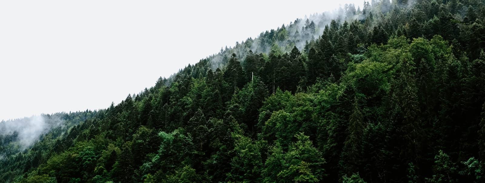 LA FISCALITÉ DU GROUPEMENT FONCIER FORESTIER : IR, IFI, SUCCESSION