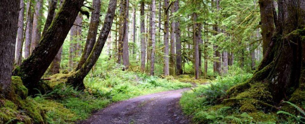 Fonctionnement et atouts du Groupement Forestier d'Investissement en France