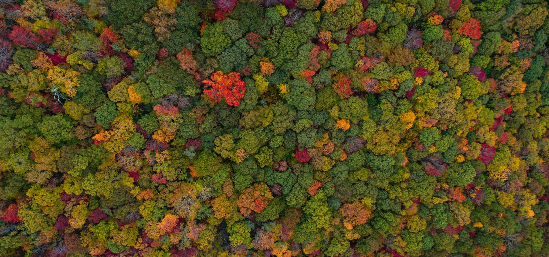 GROUPEMENT FORESTIER D'INVESTISSEMENT ( GFI )