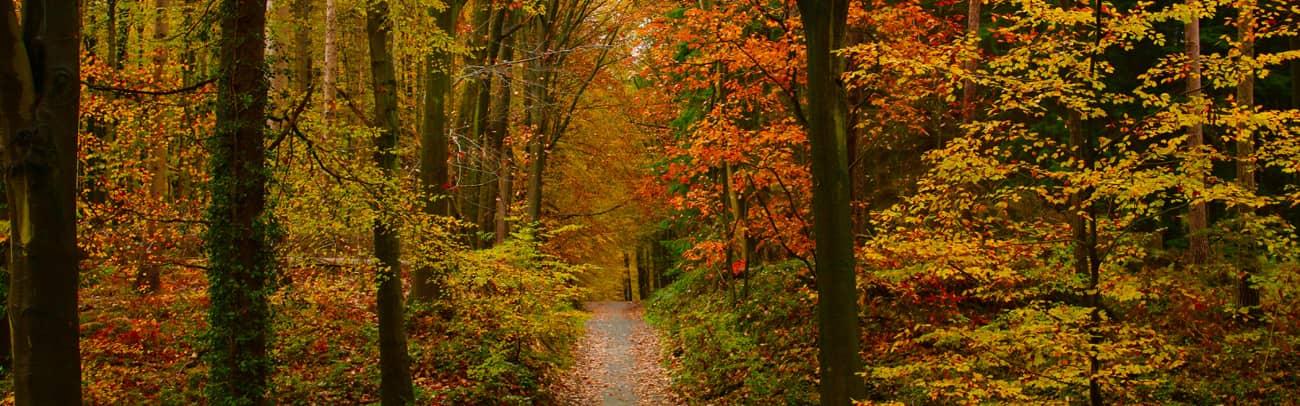 Evaluation des tarifs du bois rapport 2021 en France (1)