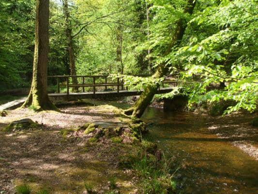 forêt d'Ecouves (Orne) France