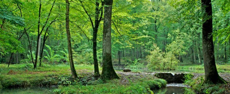forêt des Bertranges (Nièvre) France (1)