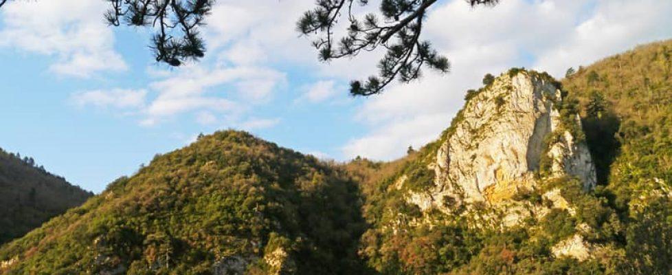forêt domaniale du Rialsesse (Aude) France