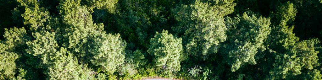 Comment bien investir dans un placement forestier français avec cabinet financier CIF AMF (1)