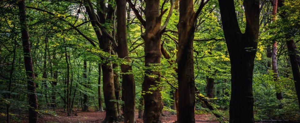 Groupements forestiers et réchauffement climatique en France (1)