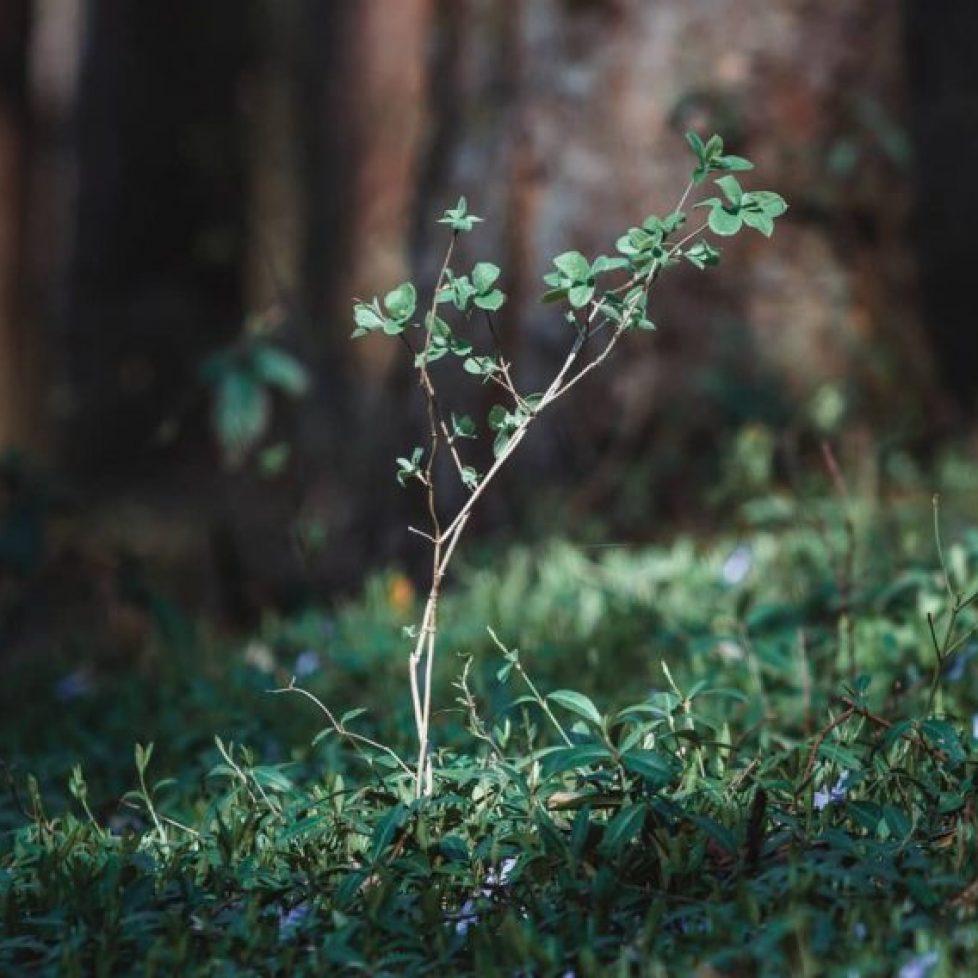 La forêt française tente de s'adapter au réchauffement climatique (1)